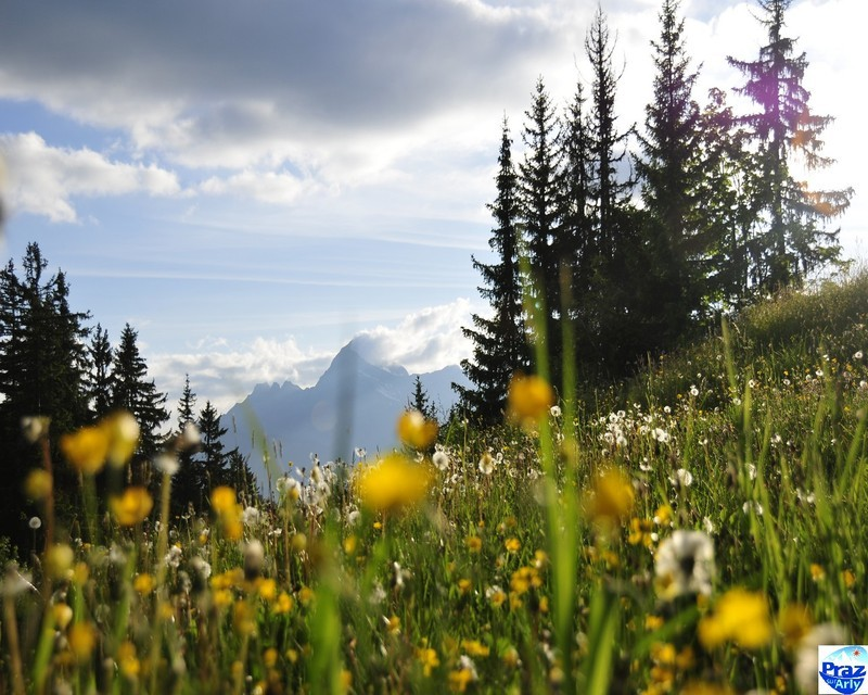 Ete paysages photos page 4 for Fond ecran ete fleurs