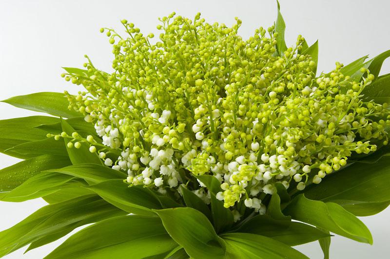 1er mai gifs for Bouquet de fleurs muguet