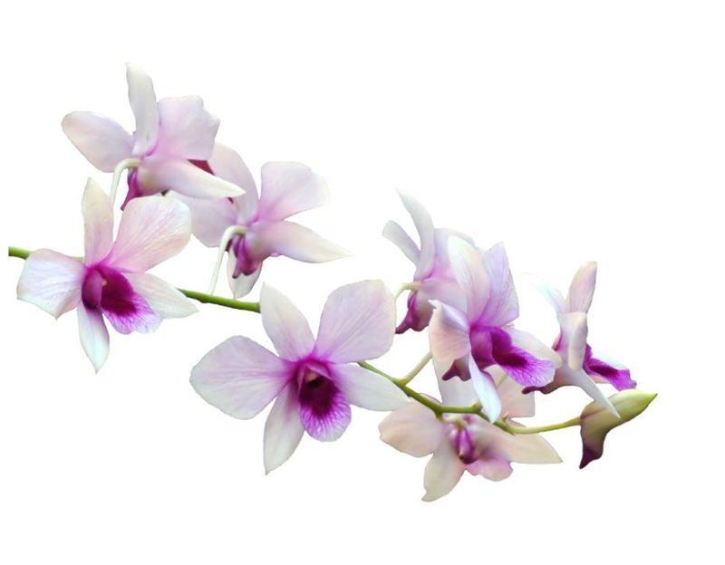 ori-sticker-fleur-orchidee-1-304_328